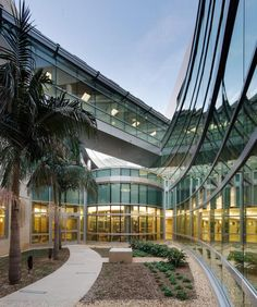 Providing access to nature and natural light was one of the main objectives of this project. More than a lightwell, the interior courtyard has a green landscaped area with palm trees and plantings. Photo: Ed LaCasse.