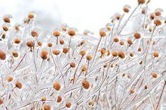 Il ghiaccio può rappresentare un'insidia e allo stesso tempo essere meraviglioso. Le sue formazioni sono soggette a numerose variabili, dagli sbalzi di temperatura al tasso d'umidità. I risultati 'estetici' sono diversi tra di loro. E a volte realmente incredibi