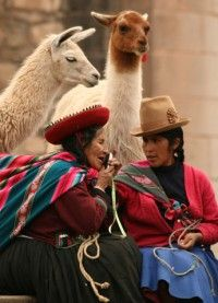 quechua people in peru and llamas, two of the countries staples
