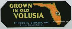 3.5x9 GROWN IN OLD VOLUSIA Vintage De Leon Springs Florida Crate Label