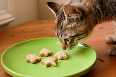 Top 10 Recipes for Homemade Cat Treats