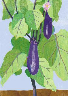 Tatsuro Kiuchi : Vegetables