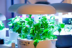 Plantui™ Smart Garden gives you the joy of growing fresh greens, a world of plants to choose from and a very cool way to light your home.