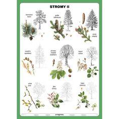 Autumn Activities For Kids, Nature Tree, Elementary Science, Botanical Illustration, Pre School, Kids Learning, Montessori, Teaching, Education