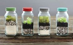 Easy-to-DIY tabletop terrariums. …