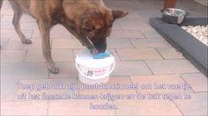 Hersenwerk voor honden: de goocheldoos
