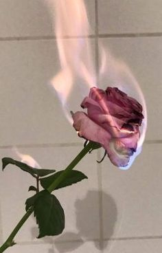 ❥ソロ審美的 # Novela Juvenil # amreading # books # wattpad flowers wallpaper dark Where stories live Tumblr Wallpaper, Flower Wallpaper, Wallpaper Backgrounds, Aesthetic Backgrounds, Aesthetic Iphone Wallpaper, Aesthetic Wallpapers, Tumblr Roses, Rose On Fire, Images Esthétiques