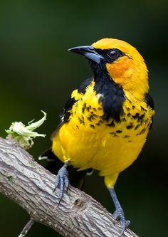 8 Ideas De Pajaros Silvestres Pajaros Silvestres Pajaros Aves