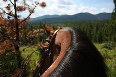 Best view ever Horse Ears, My Horse, Horse Love, Trail Riding, Horse Riding, All The Pretty Horses, Happy Trails, Show Jumping, Four Legged