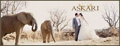 Askari Game Lodge & Spa - Magaliesberg, Gauteng Wedding Venues
