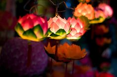 "thatbohemiangirl: "" My Bohemian Aesthetic Lovely lotus lanterns… "" Flower Lamp, Flower Lights, Fairy Lights, Garden Lanterns, Paper Lanterns, Lao Tsu, Yule, What's My Favorite Color, Dream Garden"