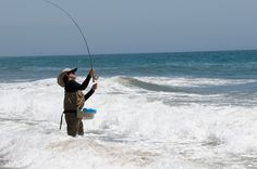 Image detail for -Fly Fishing for Leopard Sharks on the beach in Malibu California