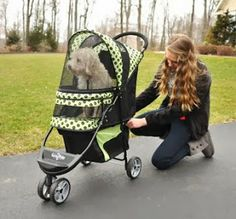 provides stylish, high-quality pet strollers, carriers and cots with exclusive Smart-Features for extra convenience, comfort and safety for your dog or cat. Large Dogs, Small Dogs, Cat Stroller, Mini Goldendoodle, Walking, Strollers, Dogs Of The World, Dog Houses, Dog Care