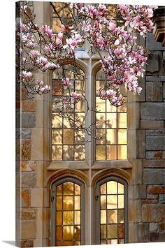 Yale Windows