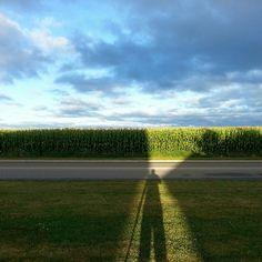 Corn fields of Onario