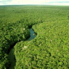 amazonia1 blog2