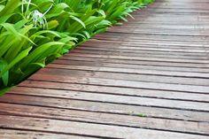 Wood pathway in the garden