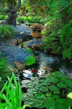 Judy's Cottage Garden: November 2013
