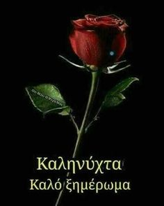 Greek Language, L Love You, Good Night Quotes, Greek Quotes, Happy Day, Good Morning, Beautiful, Garden Roses, Kara