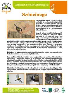 Feeding Birds In Winter, Environmental Studies, Bird Tree, Bird Feeders, Kindergarten, Homeschool, Classroom, Science, Education