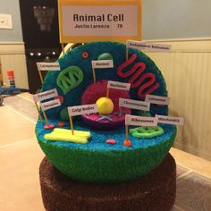 7th Grade Animal Cell 3d Project