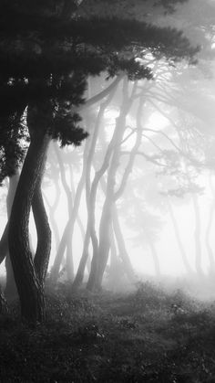 pine grove by photo21c on 500px