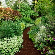 Look past the plants and consider making hardscape elements the focal point of your shade garden. For example, a path mulched with dark wood chips becomes a stunning focal point when surrounded by white-variegated bishop's weed, ornamental grasses, or golden groundcovers.
