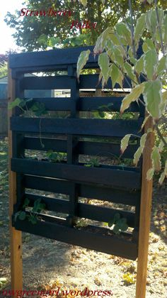 PALLET PROJECT: Pallets with Strawberries