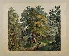 Wald. Decoration. [No. 1.]