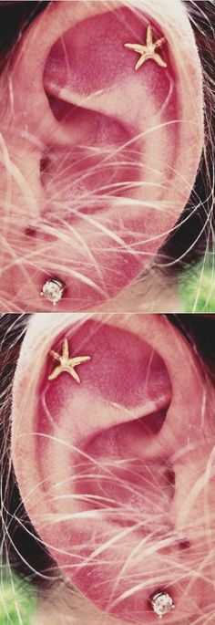 Simple Ear Piercing Ideas at MyBodiArt.com - Cute Gold Starfish Star Cartilage Helix Earring Stud 16G