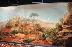Biotope reptile terrarium