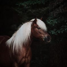 Horse Background, Background Pictures, All The Pretty Horses, Beautiful Horses, Icelandic Horse, Horse Photos, Equine Art, Palomino, Equine Photography