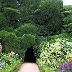 "497 Likes, 8 Comments - I S L A S I M P S O N (@isla_simpson) on Instagram: ""☁️☁️Cloud clipped Yew hedge topiary at Powis Castle.  x Sarah Charlesworth. . . . #powiscastle"""