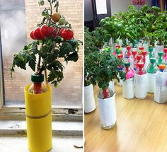 How to Turn Plastic Bottles Into Veggie Gardens via Brit + Co.