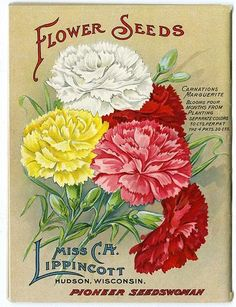 """The back cover of Carrie Lippincott's 1913 catalog hosts beautifully illustrated carnations of various colors. Carrie Lippincott, the self-proclaimed """"pioneer seedswoman"""" and """"first woman in the flower seed industry"""" established her mail-order flower seed business in Minneapolis in 1891."""