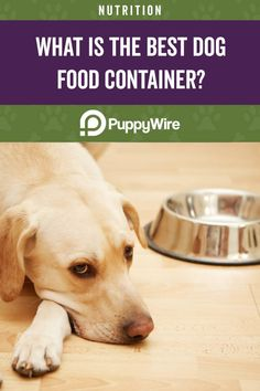 High quality dog food won't do any good if it isn't probably stored. Read our buyer's guide and reviews for the best dog food containers. Best Dog Food, Dry Dog Food, Best Dogs, Pet Food Container, Food Containers, High Quality Dog Food, Dog Food Storage, Food Out, Dog Products