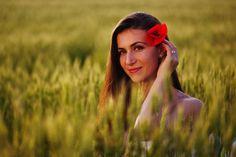 Red poppy - A red poppy in the field