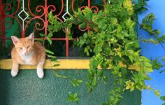 10 Cat-Safe Plants for Your Balcony Garden House Plant Care, House Plants, World Cat Day, Raising Kittens, Cat Safe Plants, Cat Brain, Cat Years, Cat With Blue Eyes, Cat Sweaters