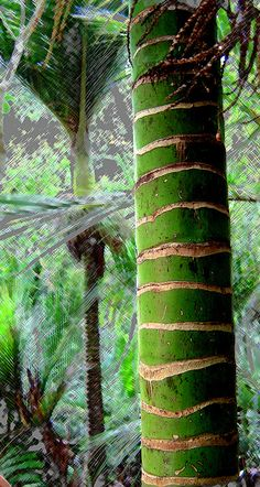 Photo of a nikau I took at Wenderholm and then modified