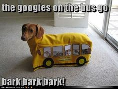 Bus dog WTF is wrong with people