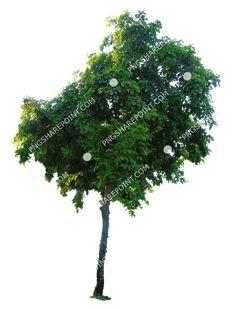 Dandelion, Photoshop, Landscape, Flowers, Plants, Image, Design, Scenery, Dandelions