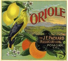 Pomona Oriole Bird Orange Citrus Crate Label Art Print