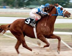 Secretariat, I did a project on this horse, he was so beautiful and majestic