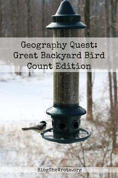 Join us for the Great Backyard Bird Count- a weekend in mid February where people around the world survey the birds that come to their backyard! Great Backyard Bird Count, Backyard Birds, Bird Sightings, Bird Guides, Bird Migration, Audubon Society, Nature Study, Bird Species, How To Look Pretty