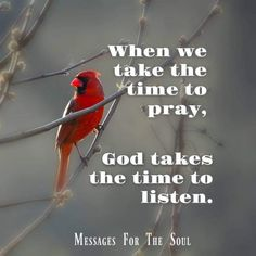 Need more prayers Great Quotes, Quotes To Live By, Inspirational Quotes, Bird Quotes, Spiritual Inspiration, Faith In God, Meaningful Quotes, True Words, Spiritual Quotes