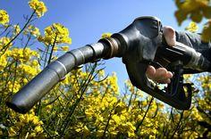 EU to cap biofuel target to protect food