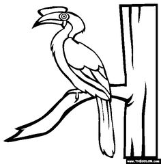 sulu hornbill coloring page free sulu hornbill online coloring