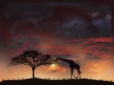 A fun image sharing community. Explore amazing art and photography and share your own visual inspiration! Pretty Pictures, Cool Photos, Pretty Pics, Out Of Africa, Mundo Animal, Oh The Places You'll Go, Amazing Nature, Nature Photos, Beautiful Images