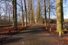De bomen bij de rekreatieplas van Bussloo/Apeldoorn