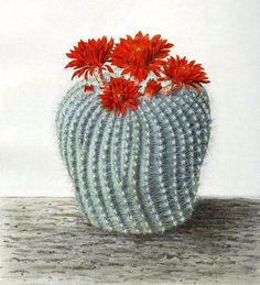 Cactus Drawing, Cactus Art, Cactus Plants, Cactus Clipart, Cactus Tattoo, Agaves, Clip Art, Drawings, Flowers